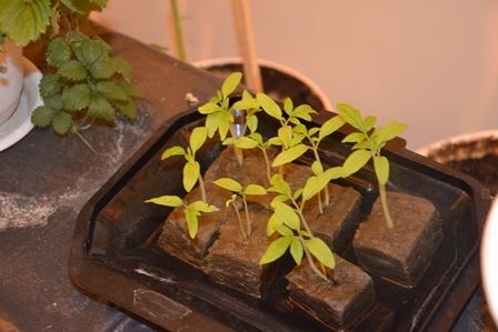 """Проект """"Умная теплица"""" - роботы выращивают растения на основе гидропоники"""